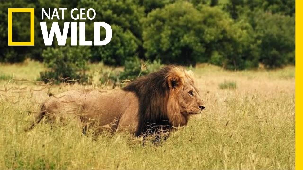 Nat Geo Wild - MartFame